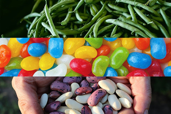 Green beans, jelly beans, and a handful of red and white beans.